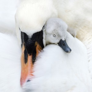 A Mother's Love by Jacky Parker