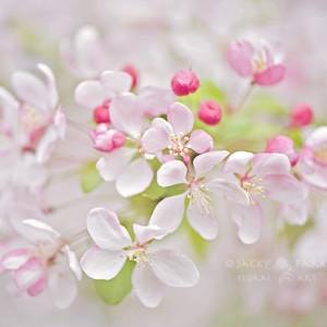 Spring Haze - Jacky Parker - 6851833277_db64bd096b_b