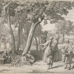 An Apple Harvest by Claude Simpol, circa 1700