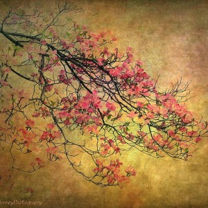 Asian Dogwood by Jessica Jenney