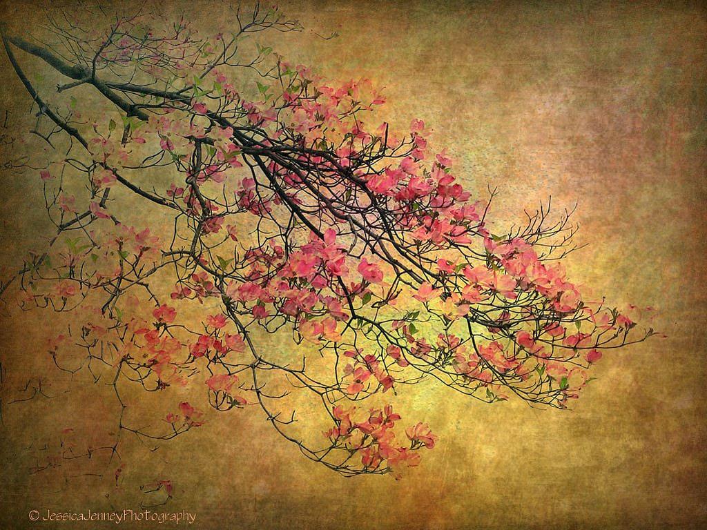 Asian Dogwood by Jessica Jenney