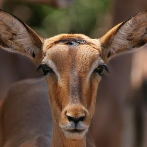 Into Africa: On Safari with Wildlife Photographer Achim Mittler