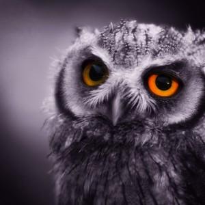 Baby Scops Owl by Stuart Richards