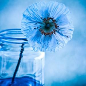 Blue by Nina Matthews