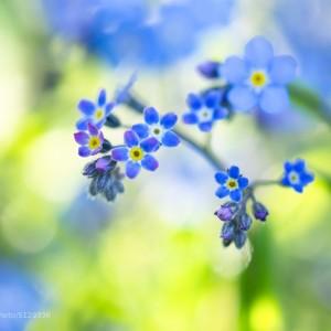 Color Collection: Blue is Bleu