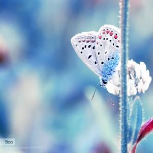 Bleu, Blanc, Rouge by Marine Szczepaniak