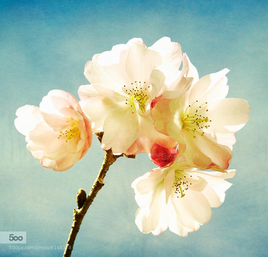 Springtime by Lars van de Goor