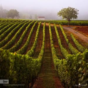 A Walk through the Vineyard II by Lars van de Goor