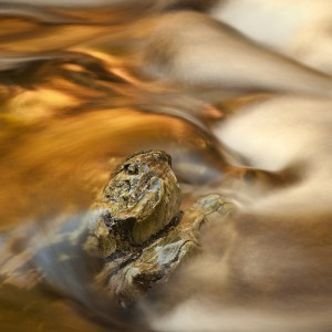 Golden Waters by Gary McParland