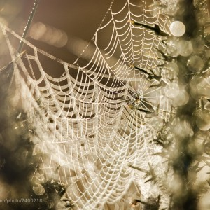 Morning Spiderweb by Gary McParland