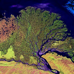 Earth from Space: Lena Delta by NASA