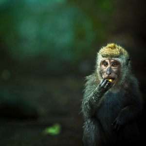 Monkey See, by Andrew of Cuba Gallery