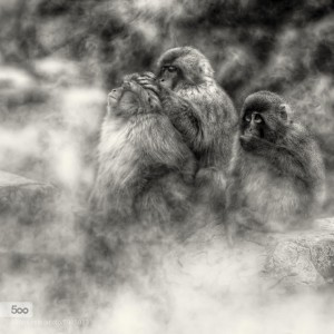 Snow Monkeys: Breathtaking Photography of the Famous Mountain Macaques in Yudanaka, Japan, by Regis Boileau