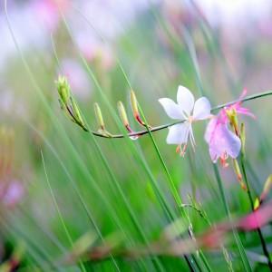 Step Softly: Enchanting Nature Photography by Dan Wang