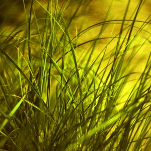 Grass by Anette Kristiansson
