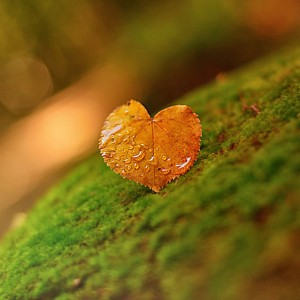 Yellow Heart by Taras Bychko