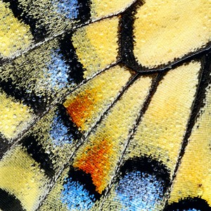 Colours on a Swallowtail Wing by Martin Amm