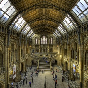 Natural History Museum, London, by Anthony Gelot