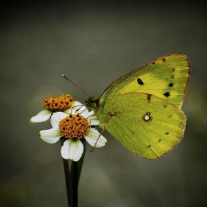 Birds, a Bee, and Butterflies: Incredible Photography by Ichiro Kishimi, Part 2