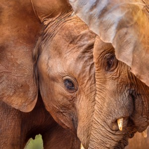 Playtime at the David Sheldrick Elephant Orphanage: Brilliant Photography by Poulomee Basu