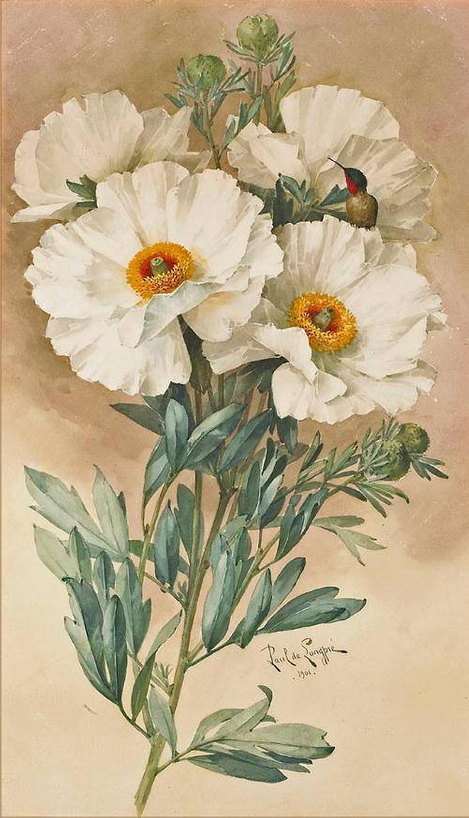 Paul de Longpre - Matilija poppies, 1901 - 661x1152