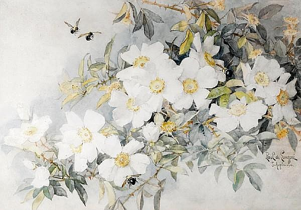 Paul de Longpre - white roses with bees