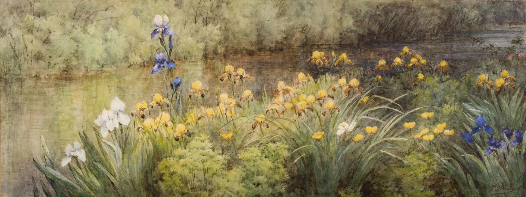 Irises along the River, by Fidelia Bridges, c. 1908