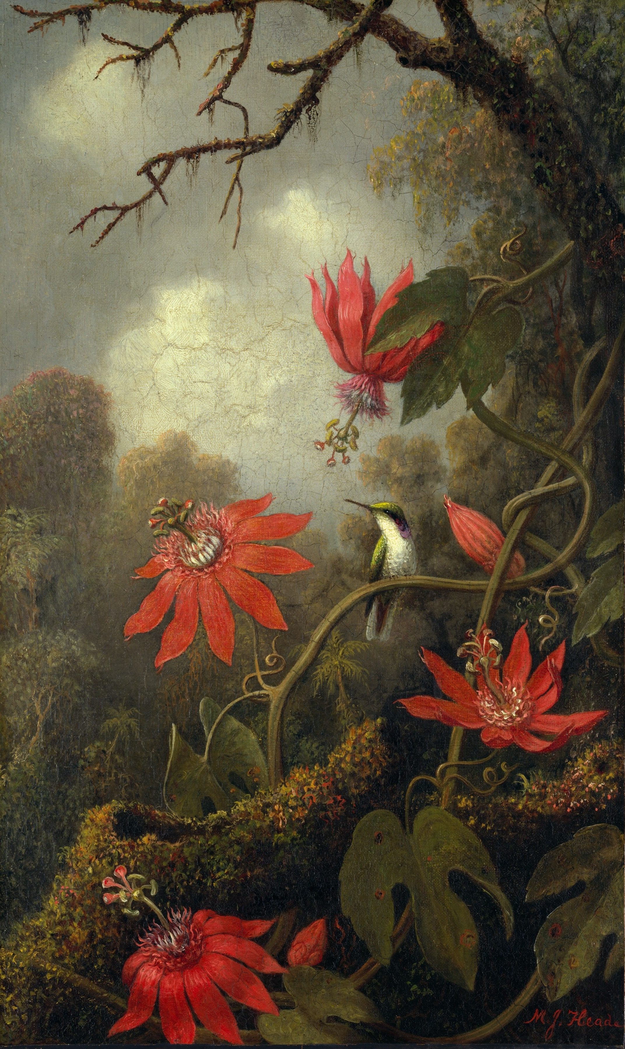 Hummingbird and Passionflowers, by Martin Johnson Heade, circa 1875, by The Met