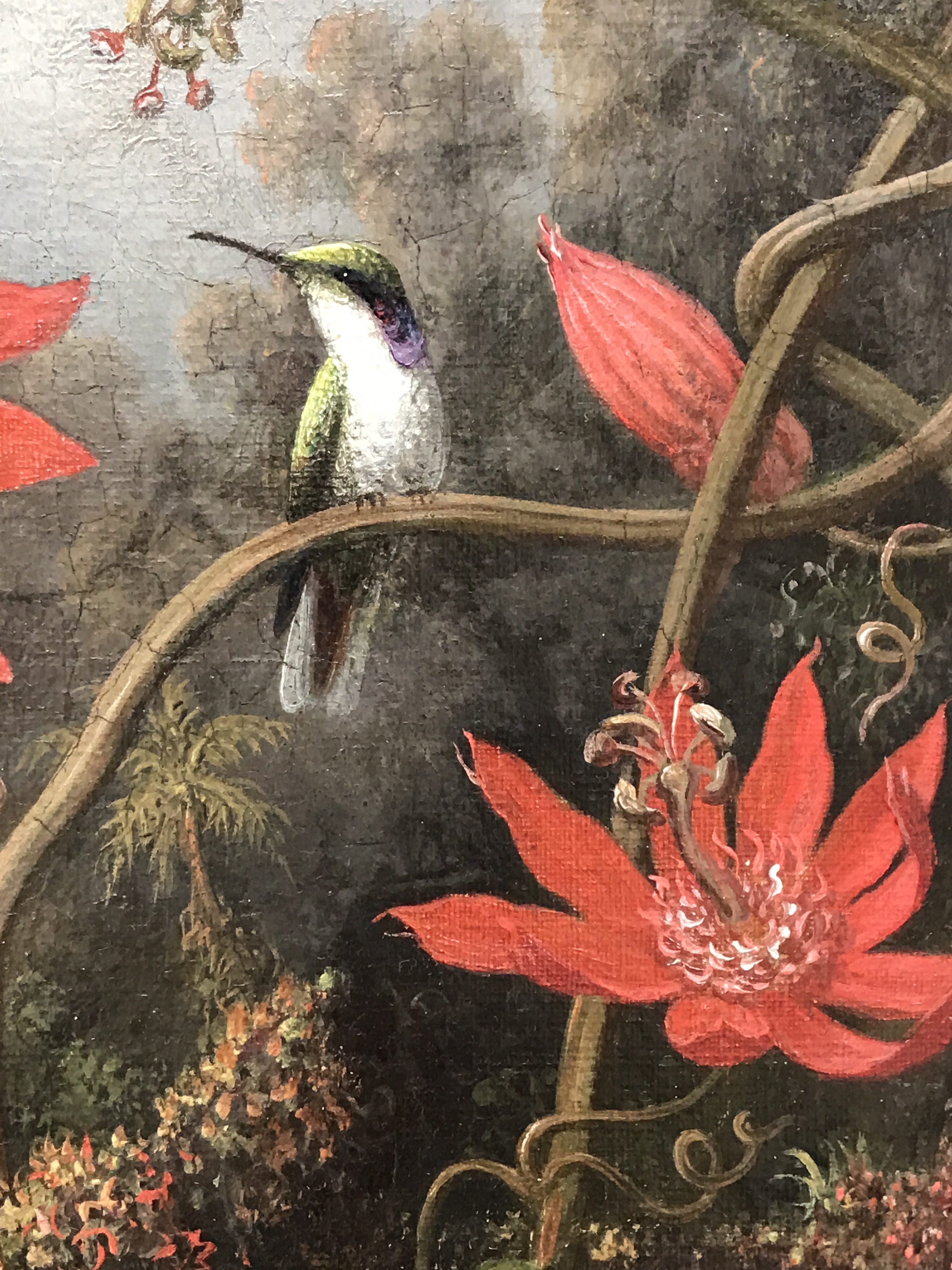 Hummingbird and Passionflowers, by Martin Johnson Heade, circa 1875, my photo