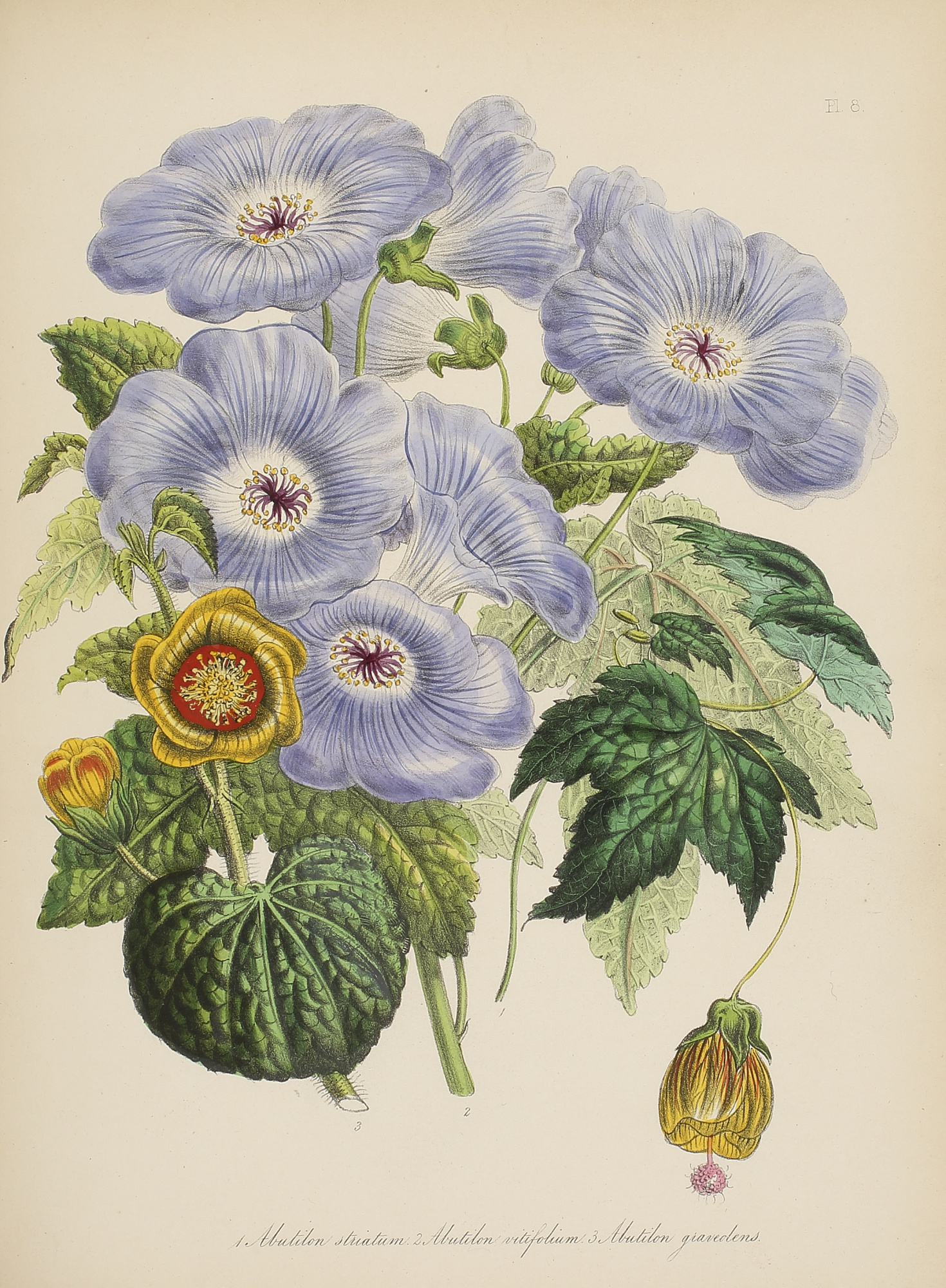 Three Floral Illustrations, by Jane Webb Loudon, 1840-46, 3